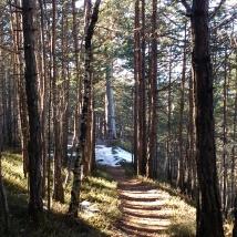 Und dann gehts durch den Wald bergab.