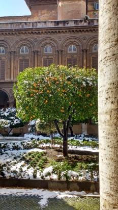 Organenbaum im Hof der Villa Pamphili. Gibt das jetzt Capri Eis?